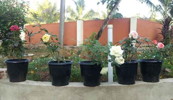 My Home Garden Kerala India